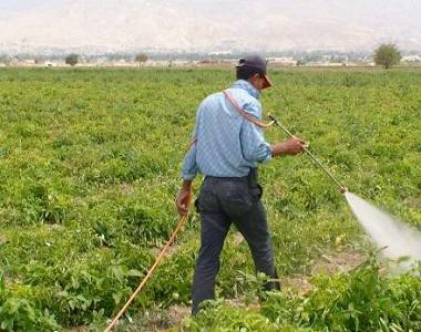 شركة رش مبيدات بالرس