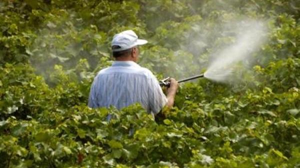 شركه رش مبيدات بحائل