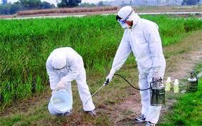 شركه رش مبيدات بينبع