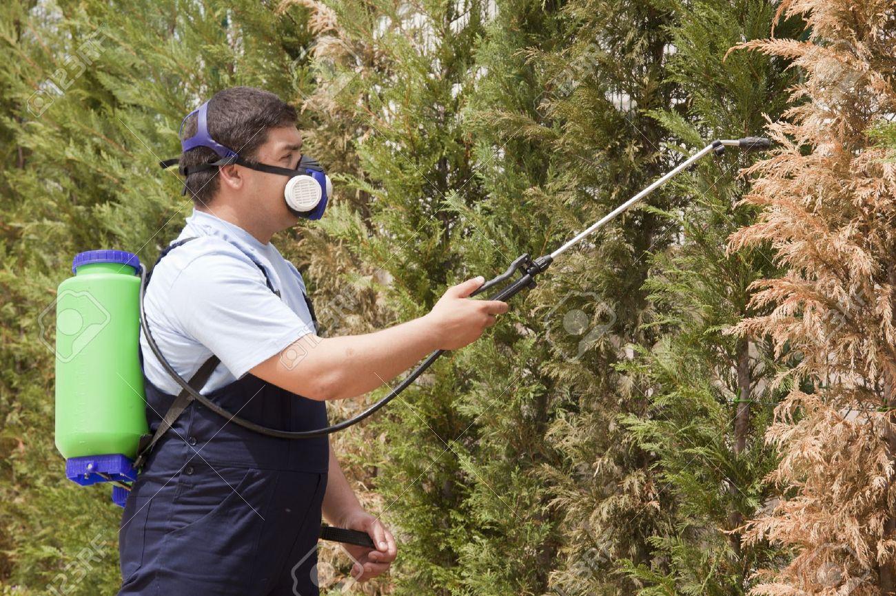 شركة رش مبيدات بالقصيم