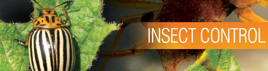 شركة مكافحه حشرات بعنيزه