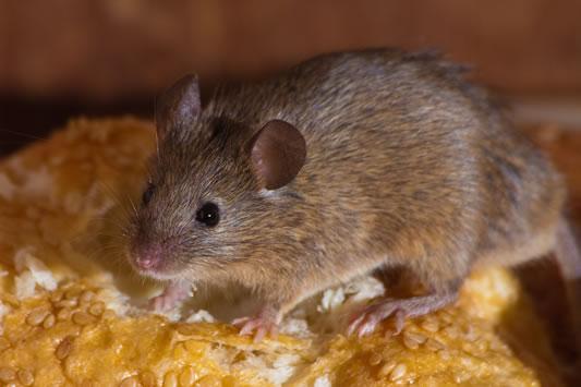 شركة مكافحة الفئران بالرياض | 0532000272